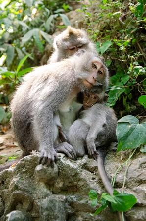 Monkey Mother