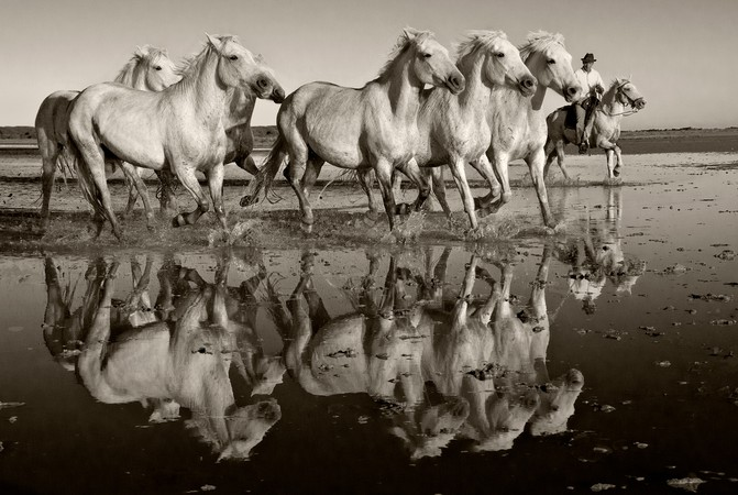 Horses of the Camargue Project