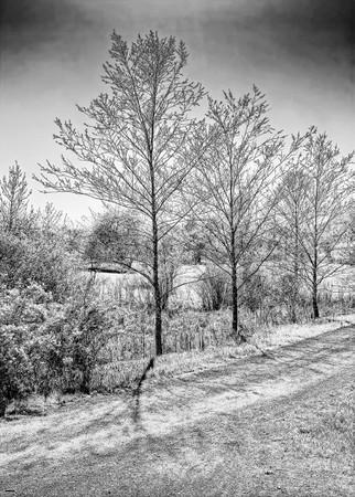Views Along a Spring Trail