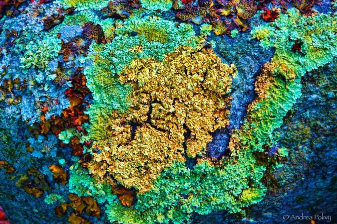 Nothing Lichen
